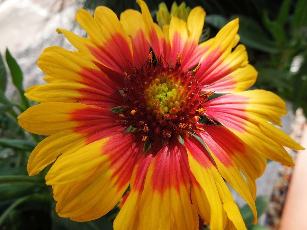 花卉日记-79_图1-11