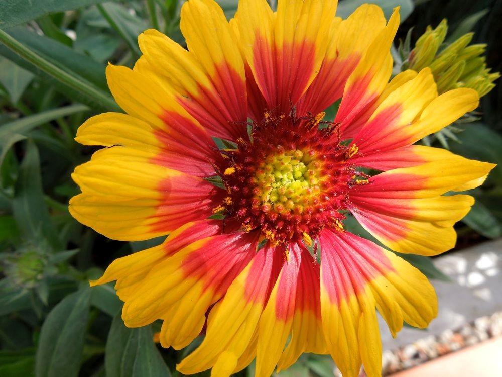 花卉日记-79_图1-12
