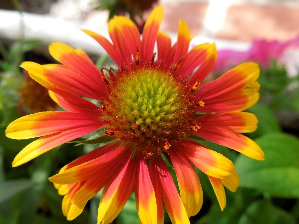 花卉日记-79_图1-13