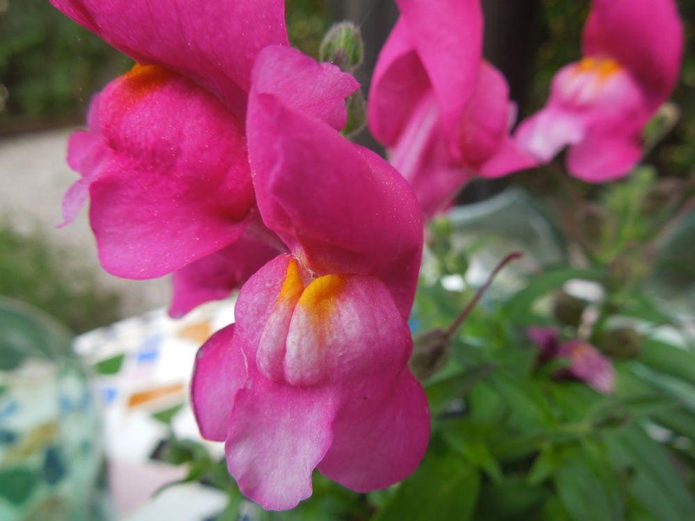 花卉日记-79_图1-15