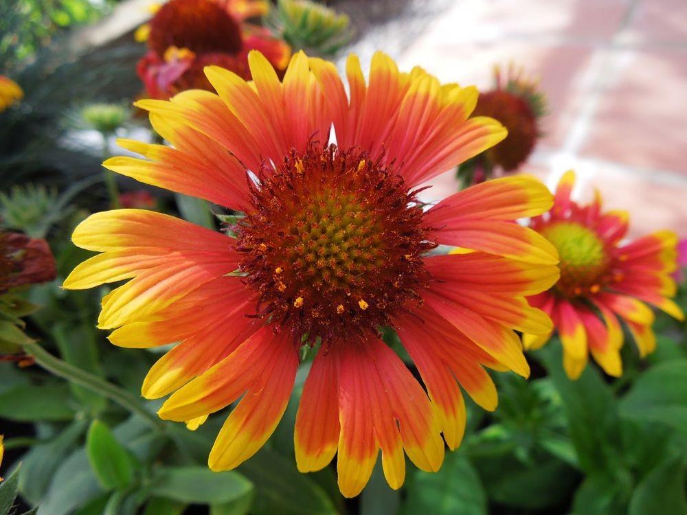 花卉日记-79_图1-14