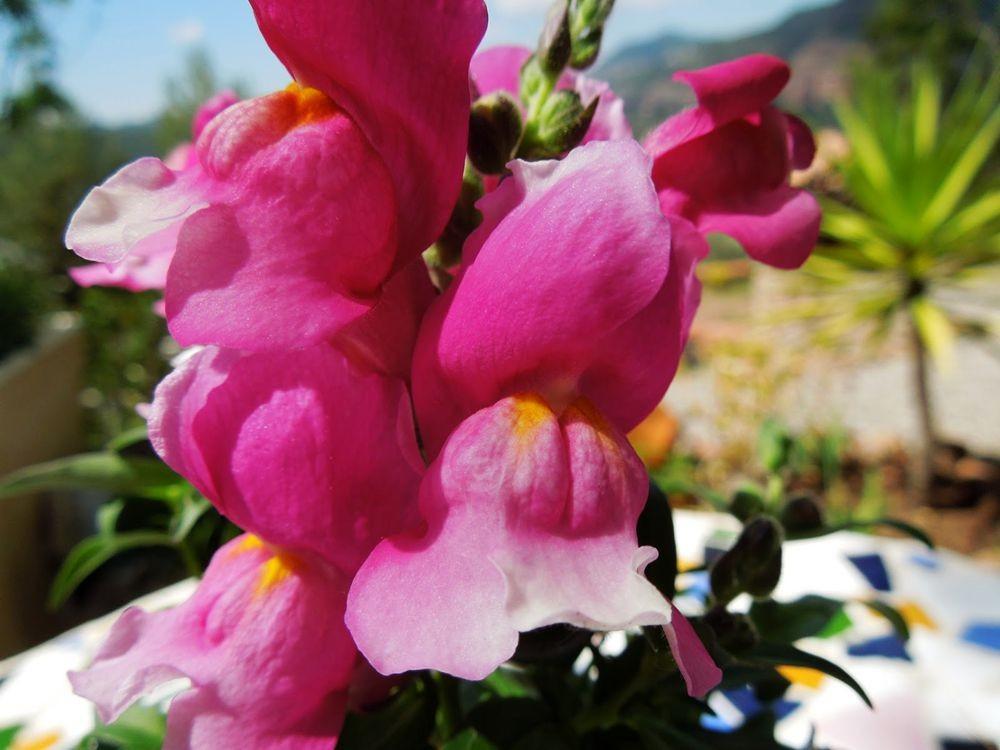 花卉日记-79_图1-16