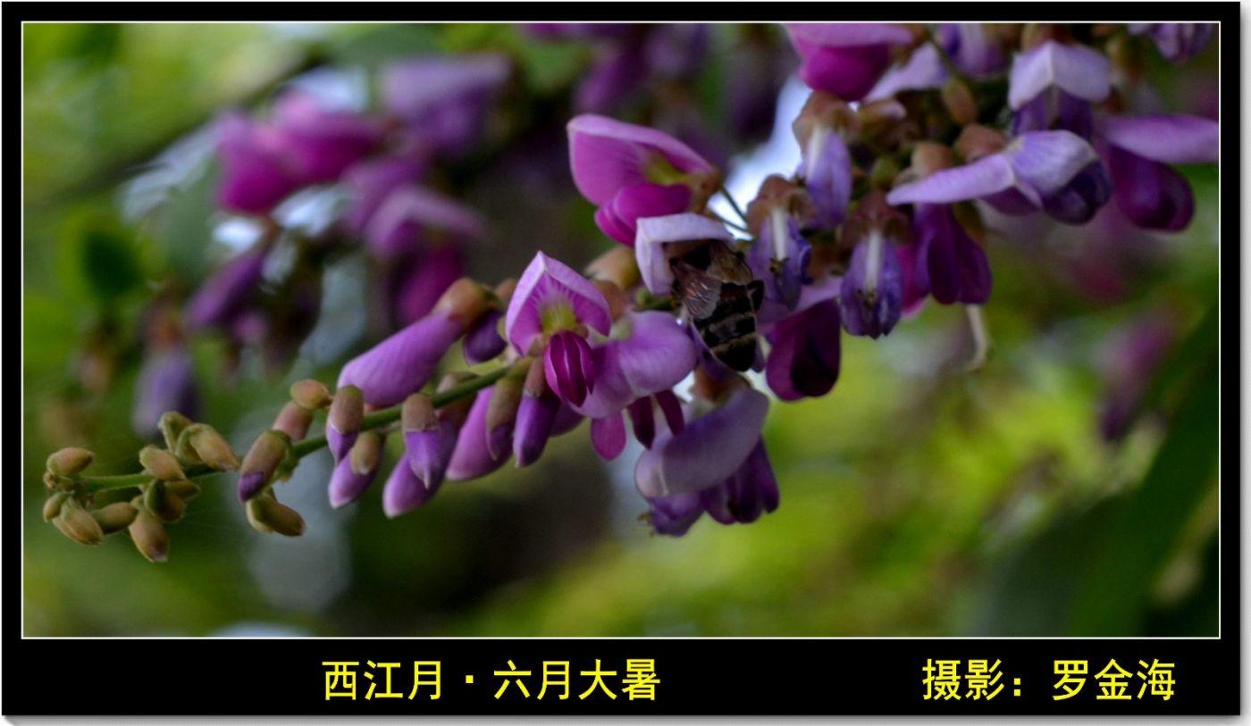 西江月·六月大暑(诗词三首)_图1-1