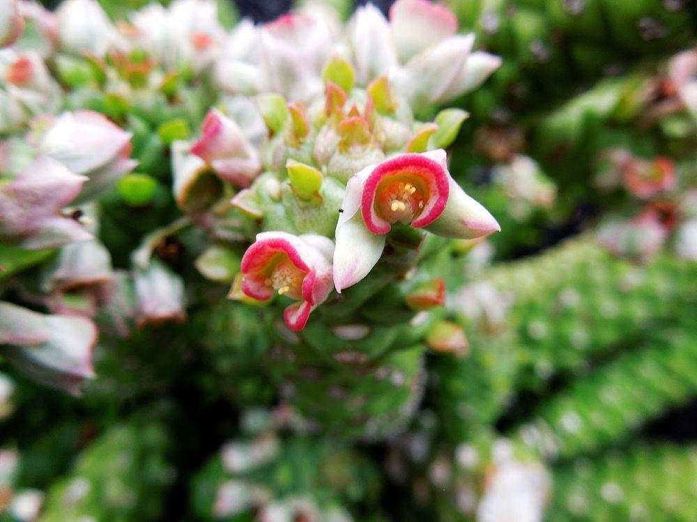花卉日记-80_图1-5