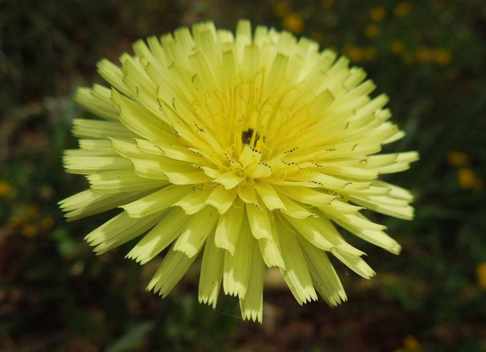 花卉日记-80_图1-8