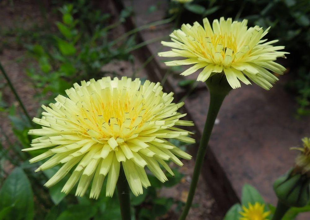 花卉日记-80_图1-9