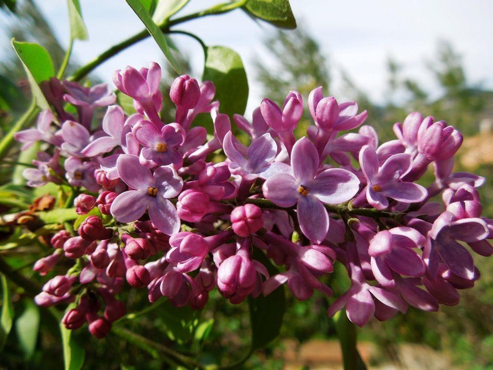 花卉日记-80_图1-14