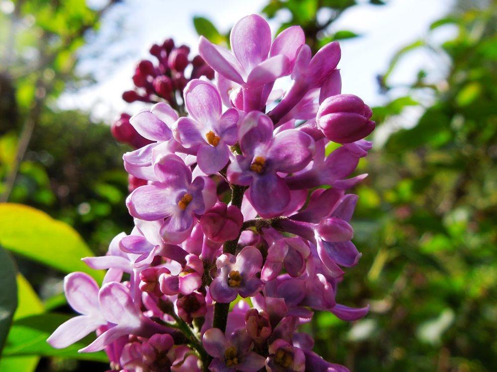花卉日记-80_图1-15