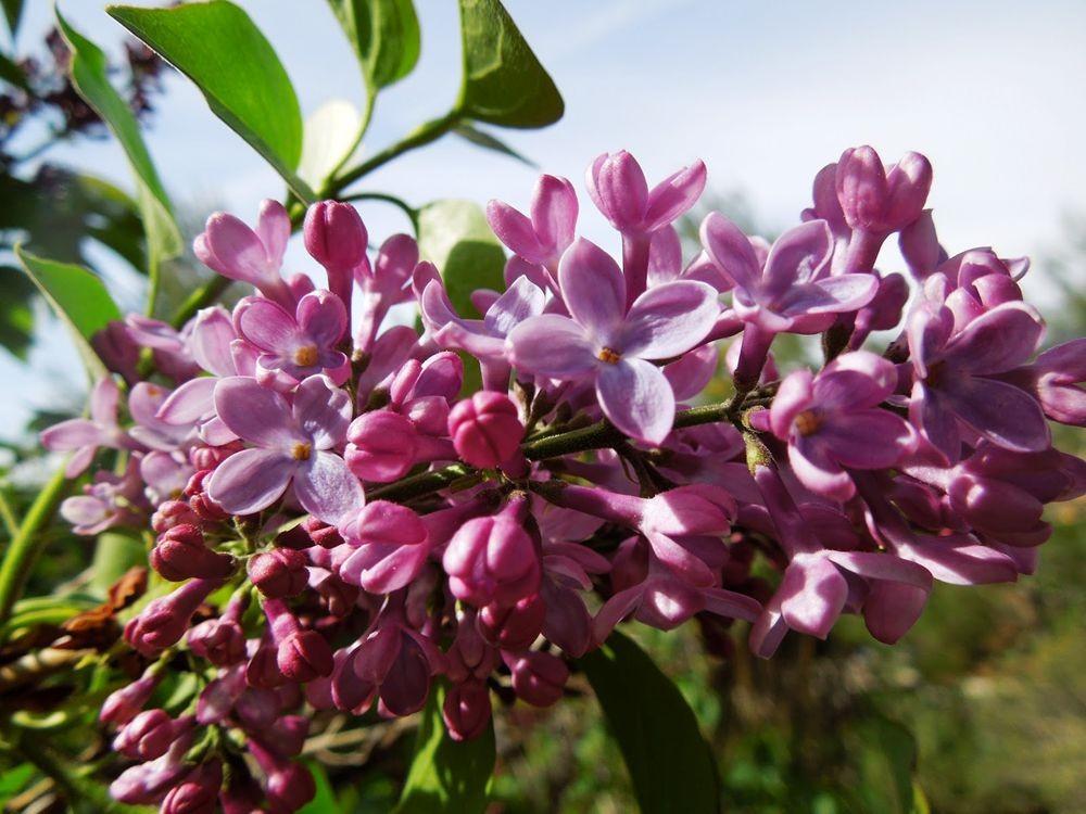 花卉日记-80_图1-16