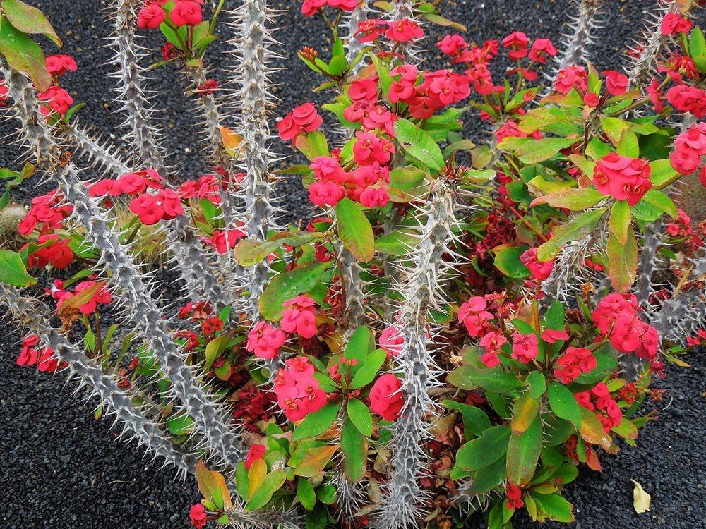 花卉日记-80_图1-18