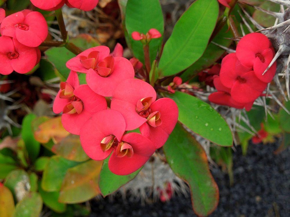 花卉日记-80_图1-19
