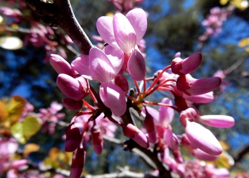 花卉日记-80_图1-25