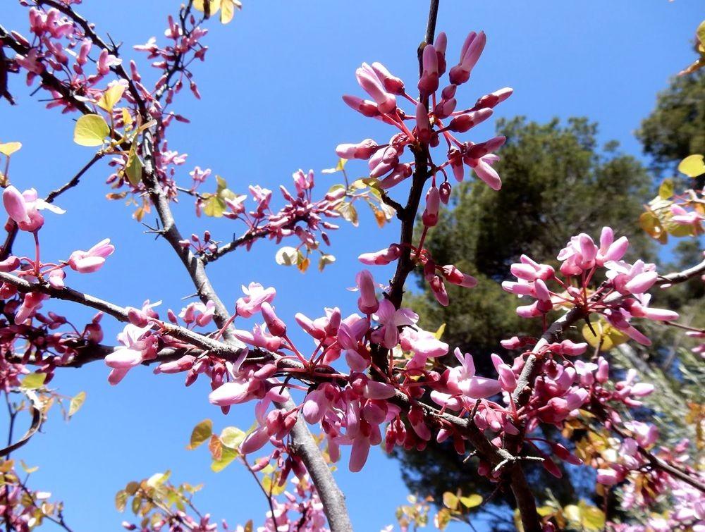 花卉日记-80_图1-27