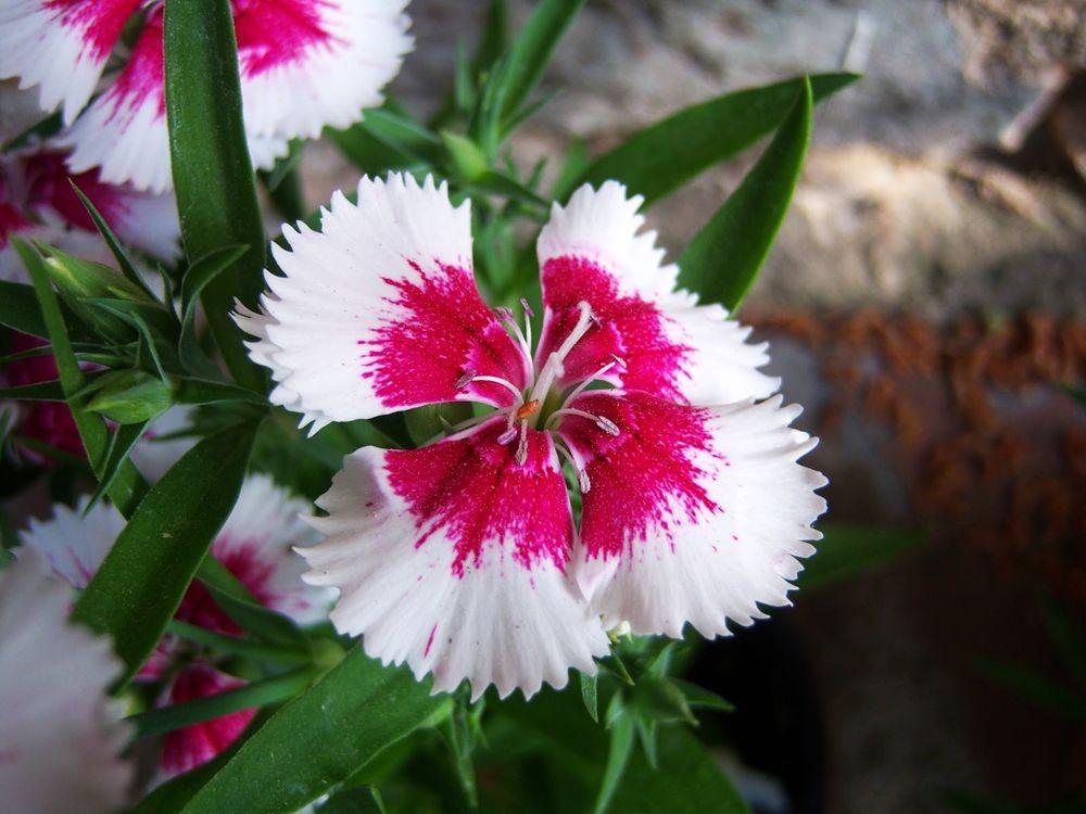 花卉日记-81_图1-1