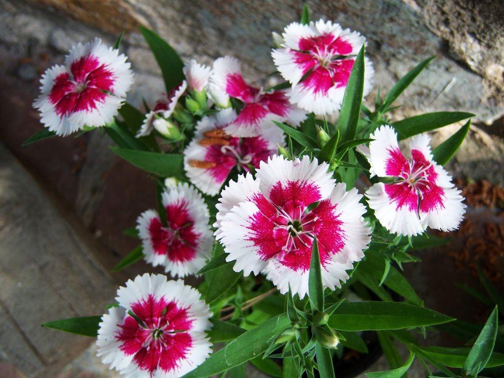 花卉日记-81_图1-2