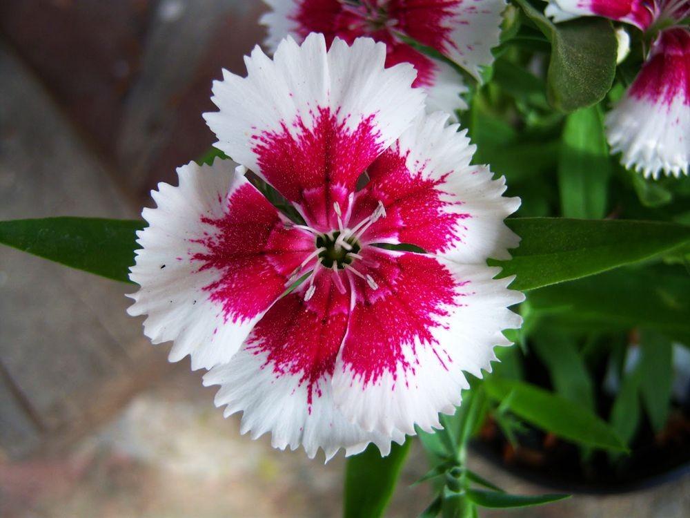 花卉日记-81_图1-3