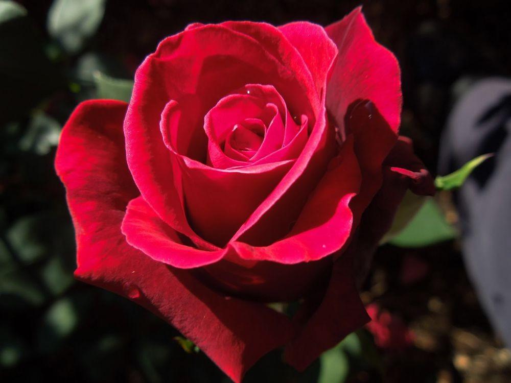 花卉日记-81_图1-6