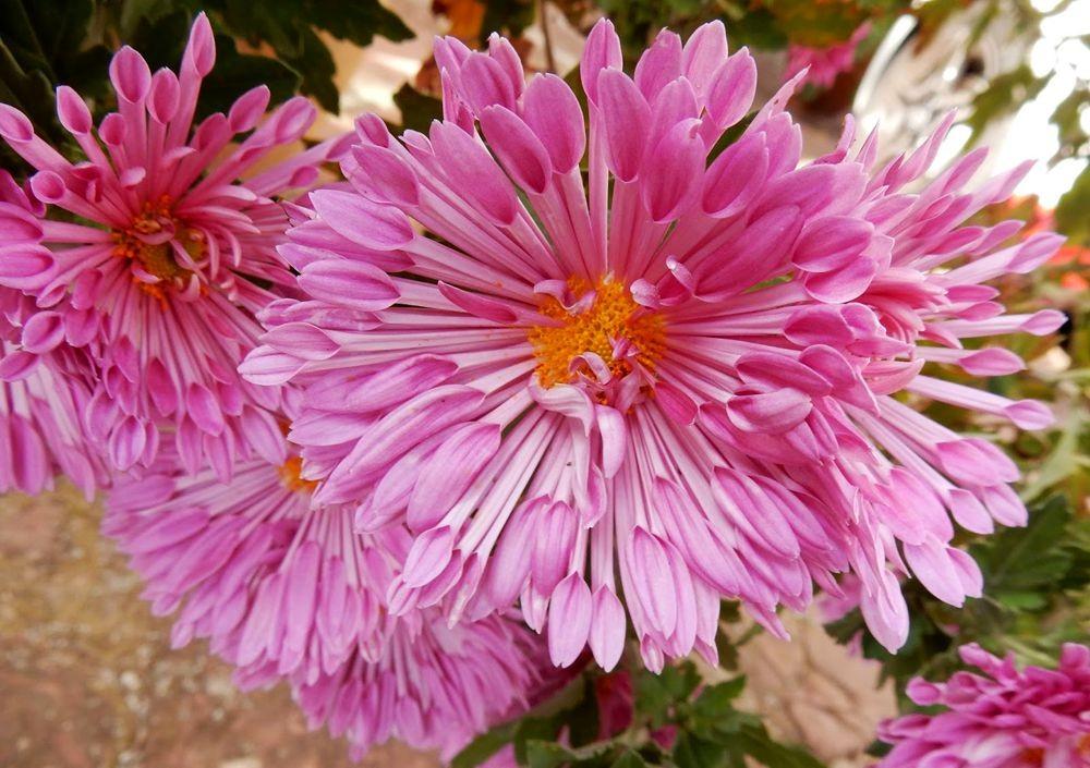 花卉日记-81_图1-8