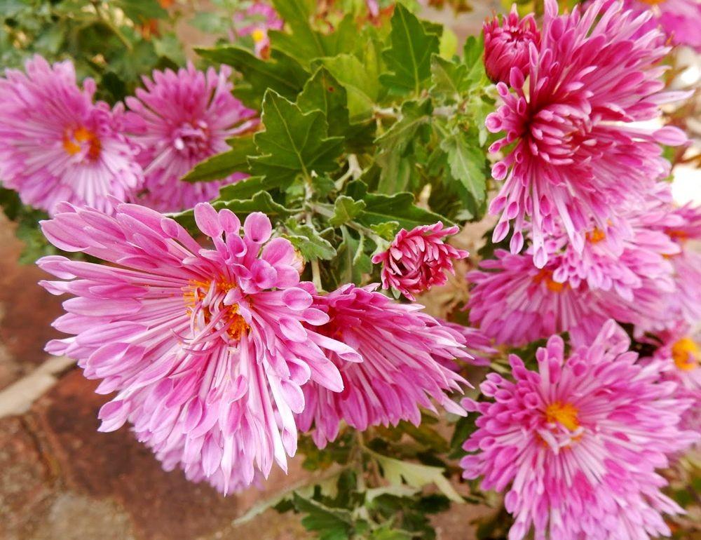 花卉日记-81_图1-9