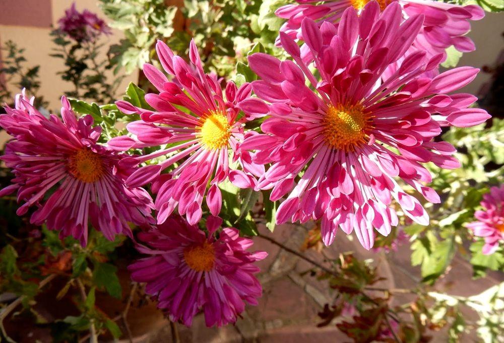 花卉日记-81_图1-10