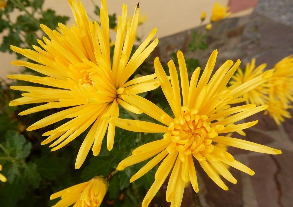 花卉日记-81_图1-11