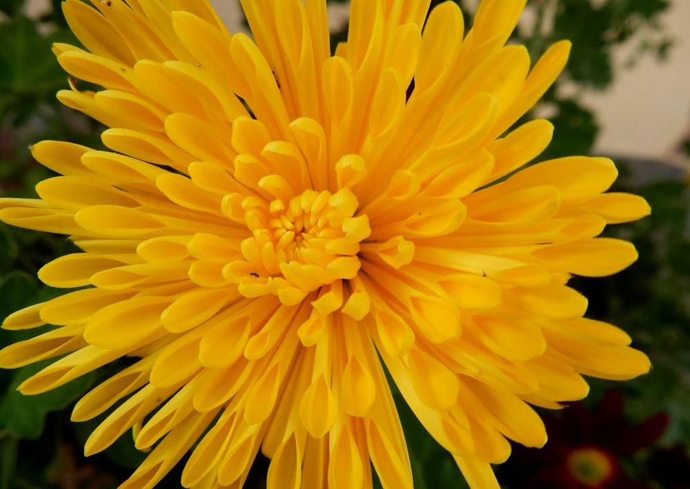 花卉日记-81_图1-12