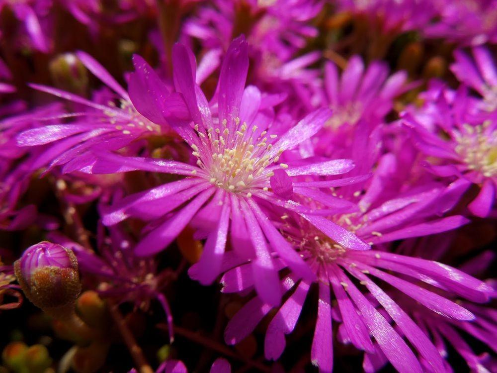 花卉日记-81_图1-13