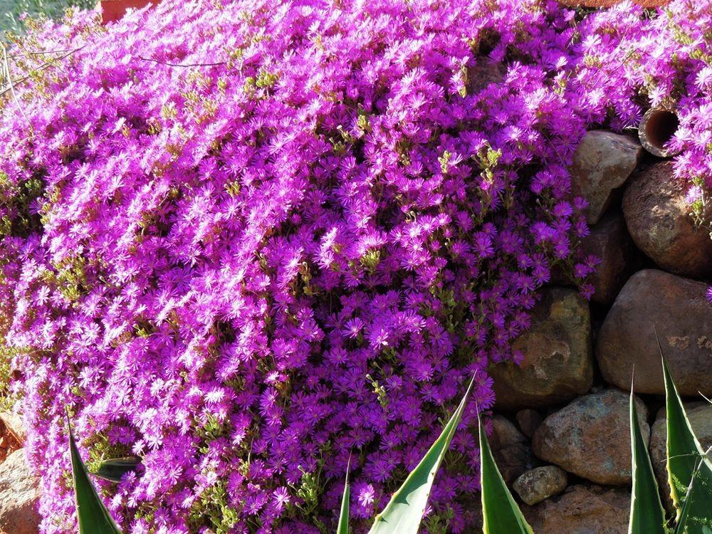 花卉日记-81_图1-16