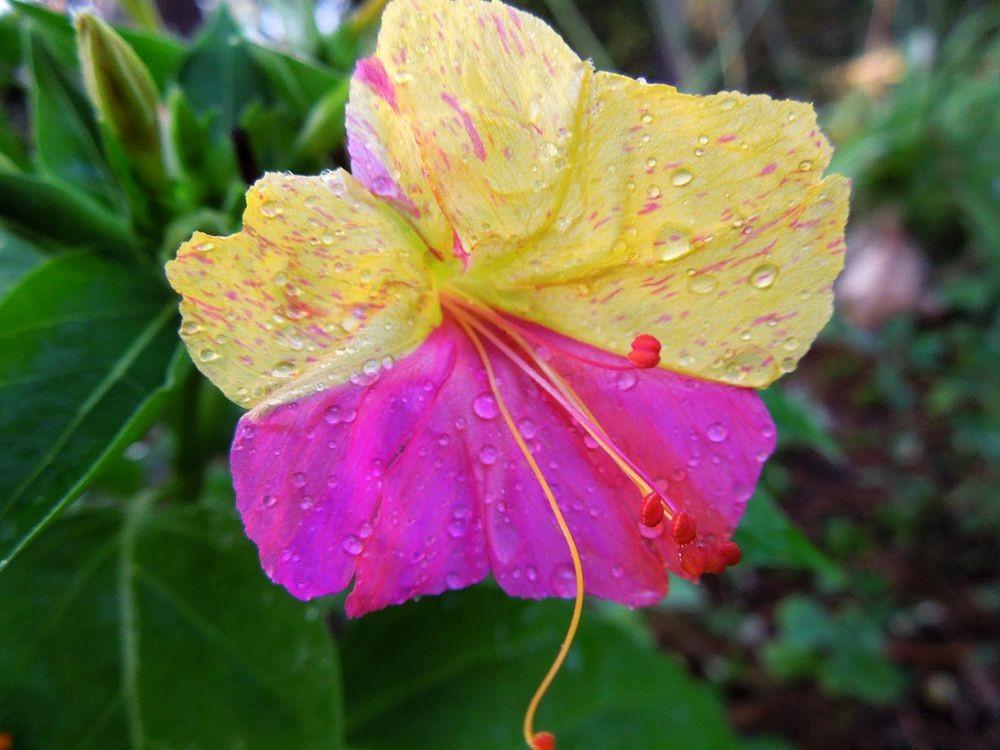 花卉日记-81_图1-18