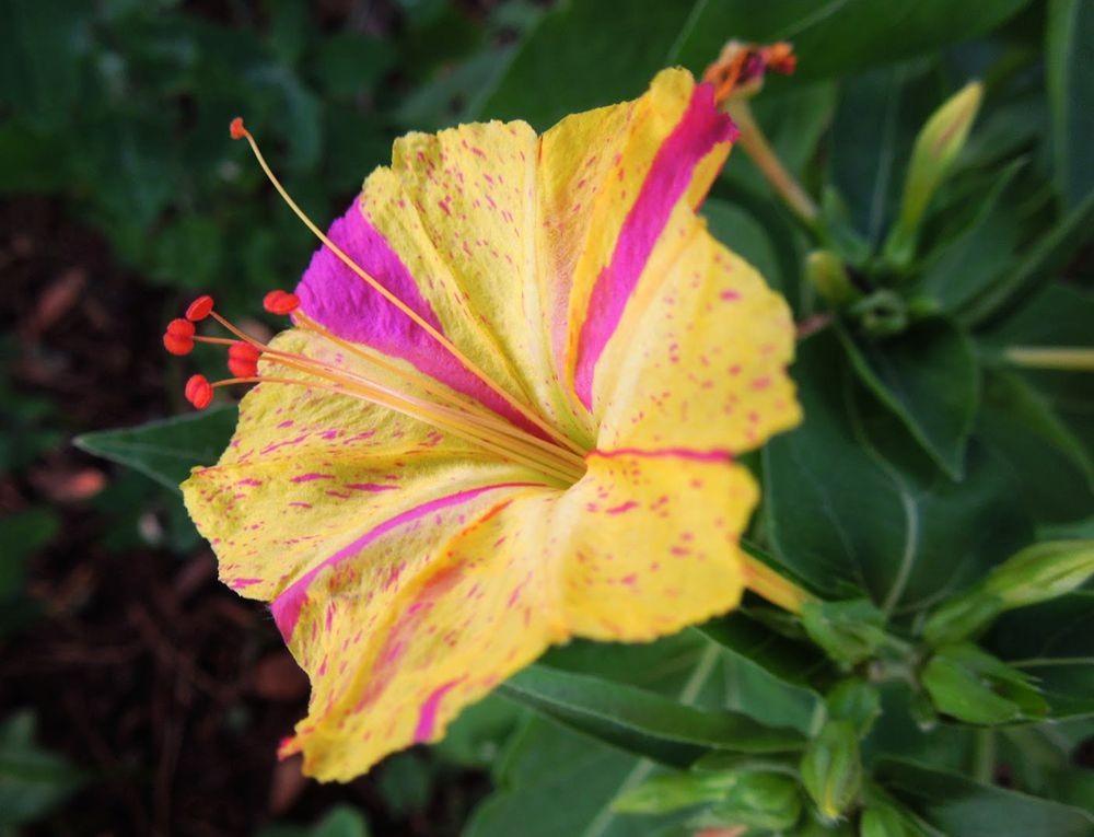 花卉日记-81_图1-19
