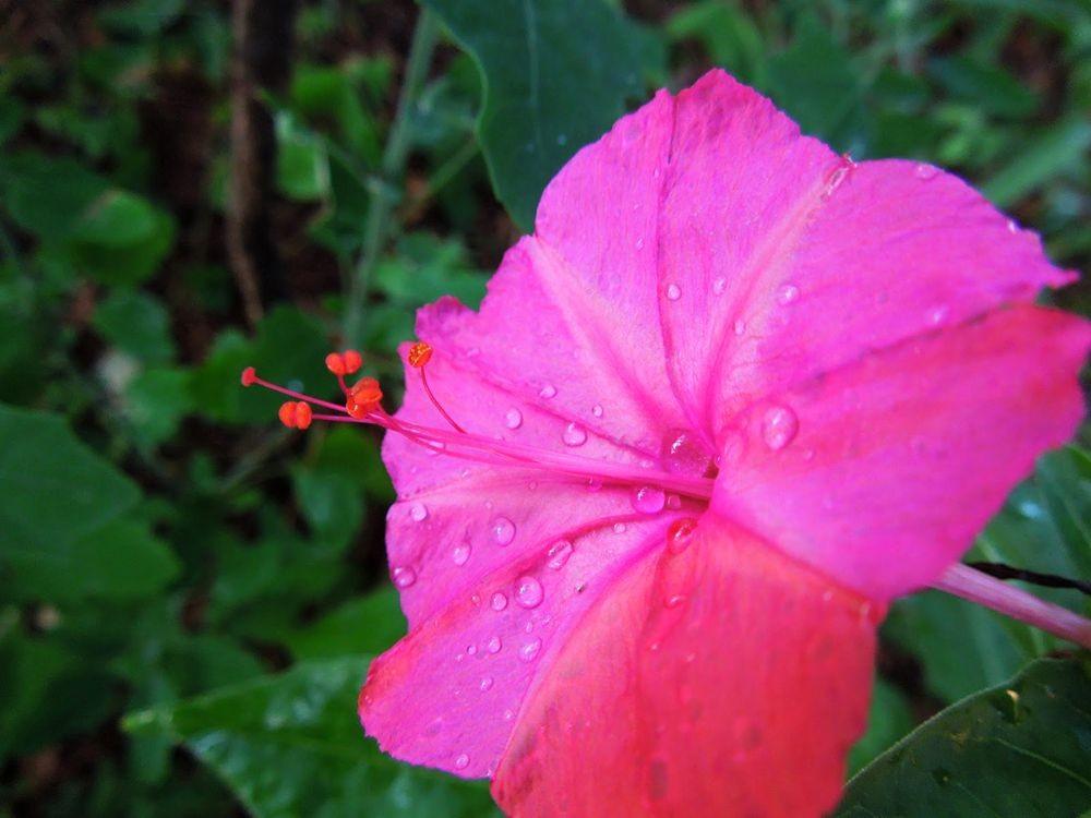 花卉日记-81_图1-20