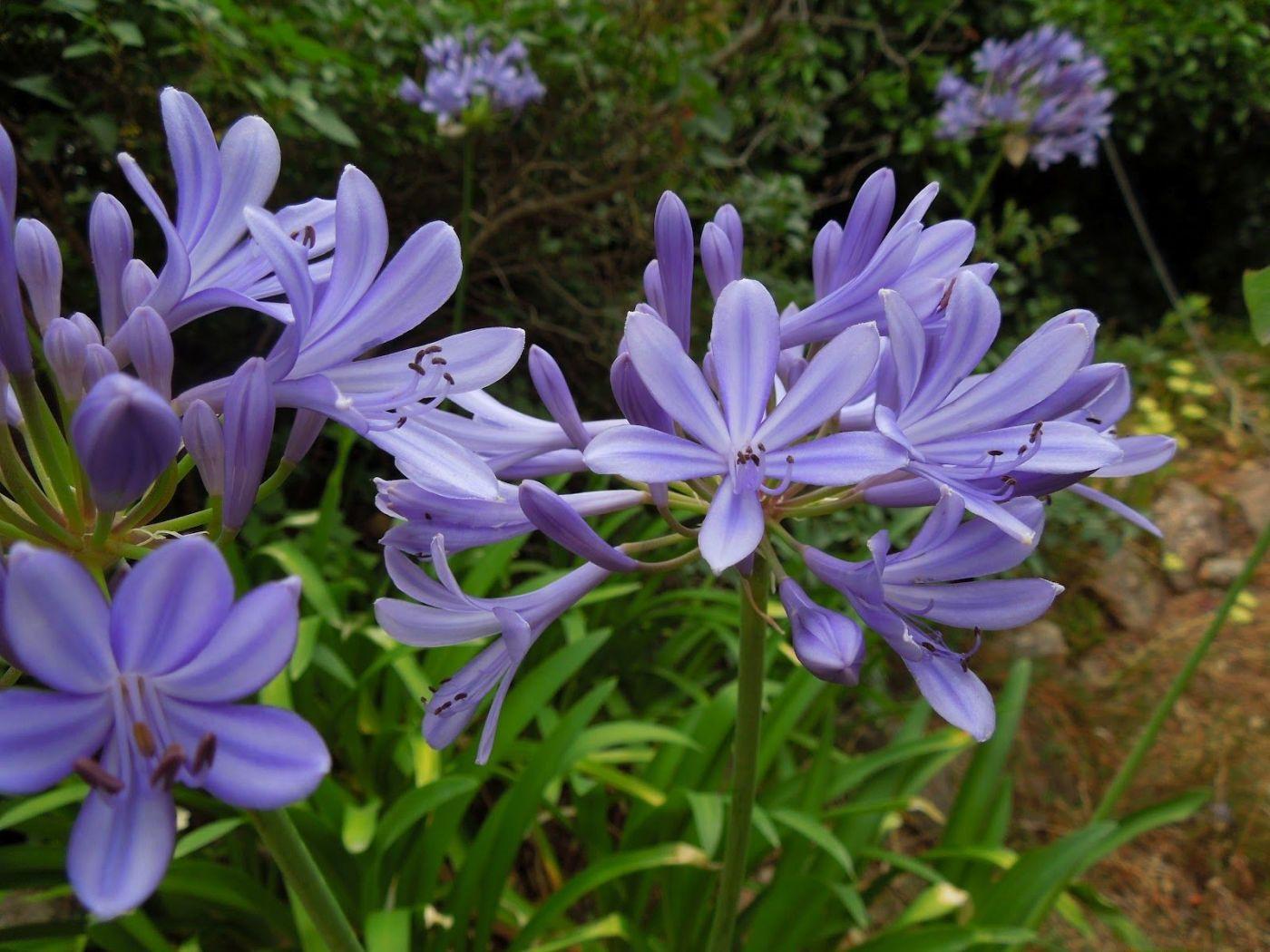 花卉日记-81_图1-27