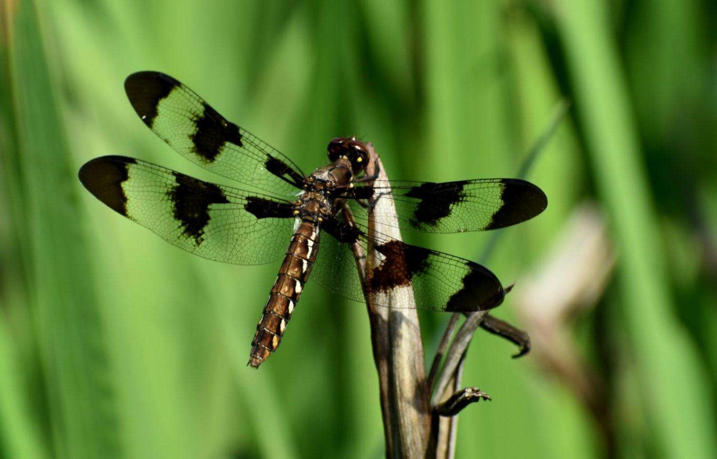 轻盈秀丽的蜻蜓_图1-6