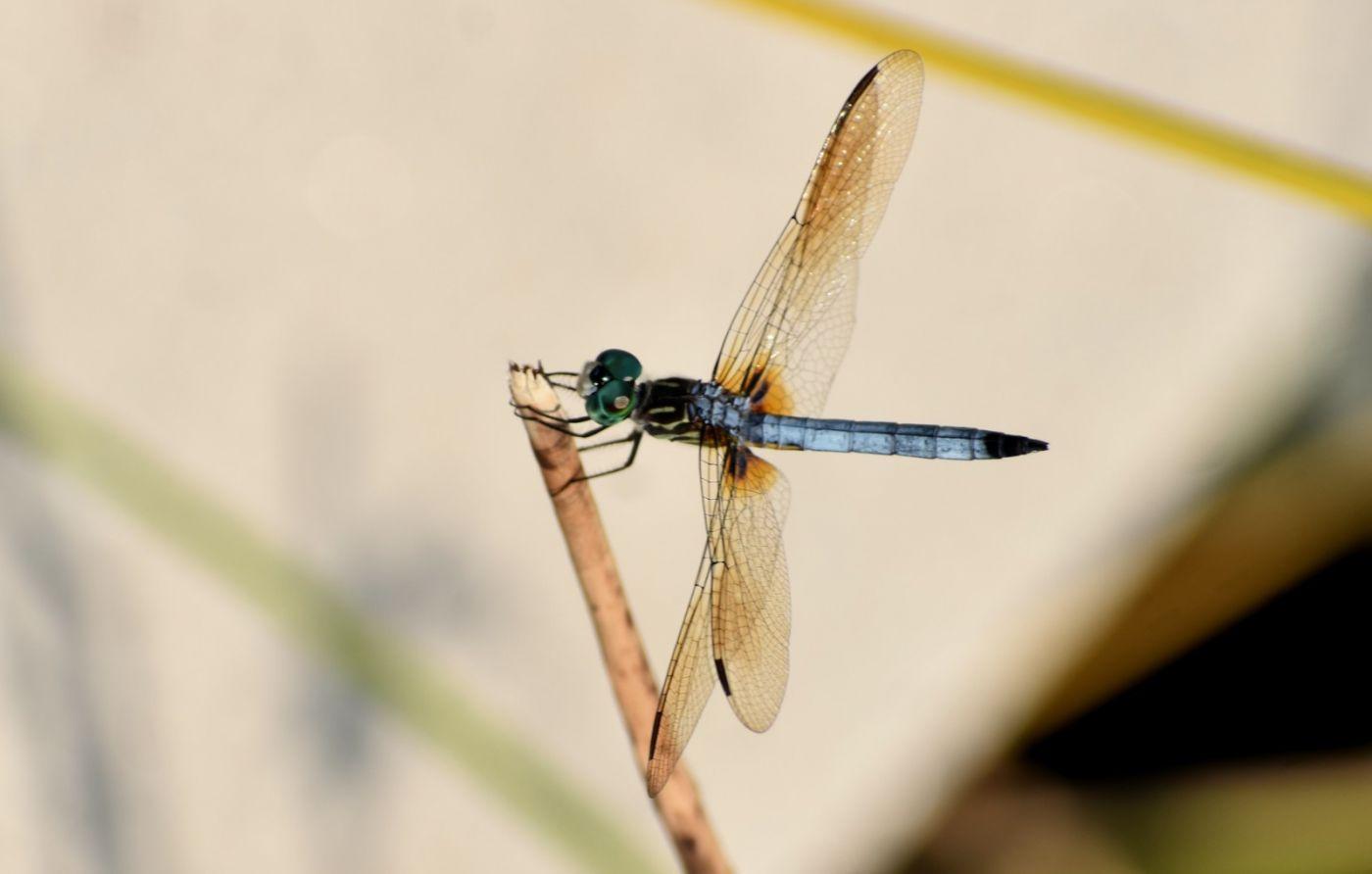 轻盈秀丽的蜻蜓_图1-10