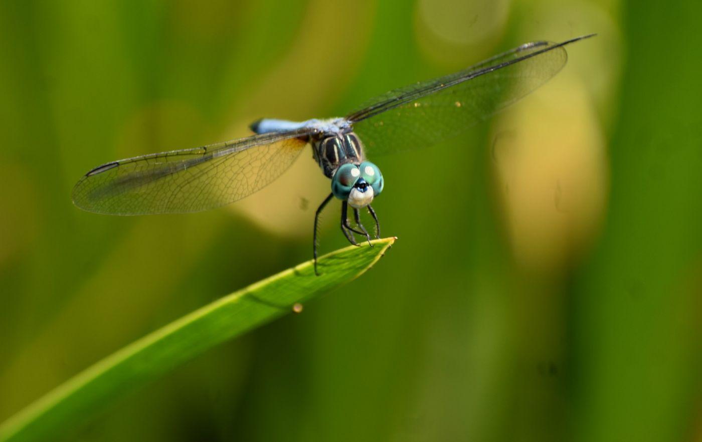 轻盈秀丽的蜻蜓_图1-13