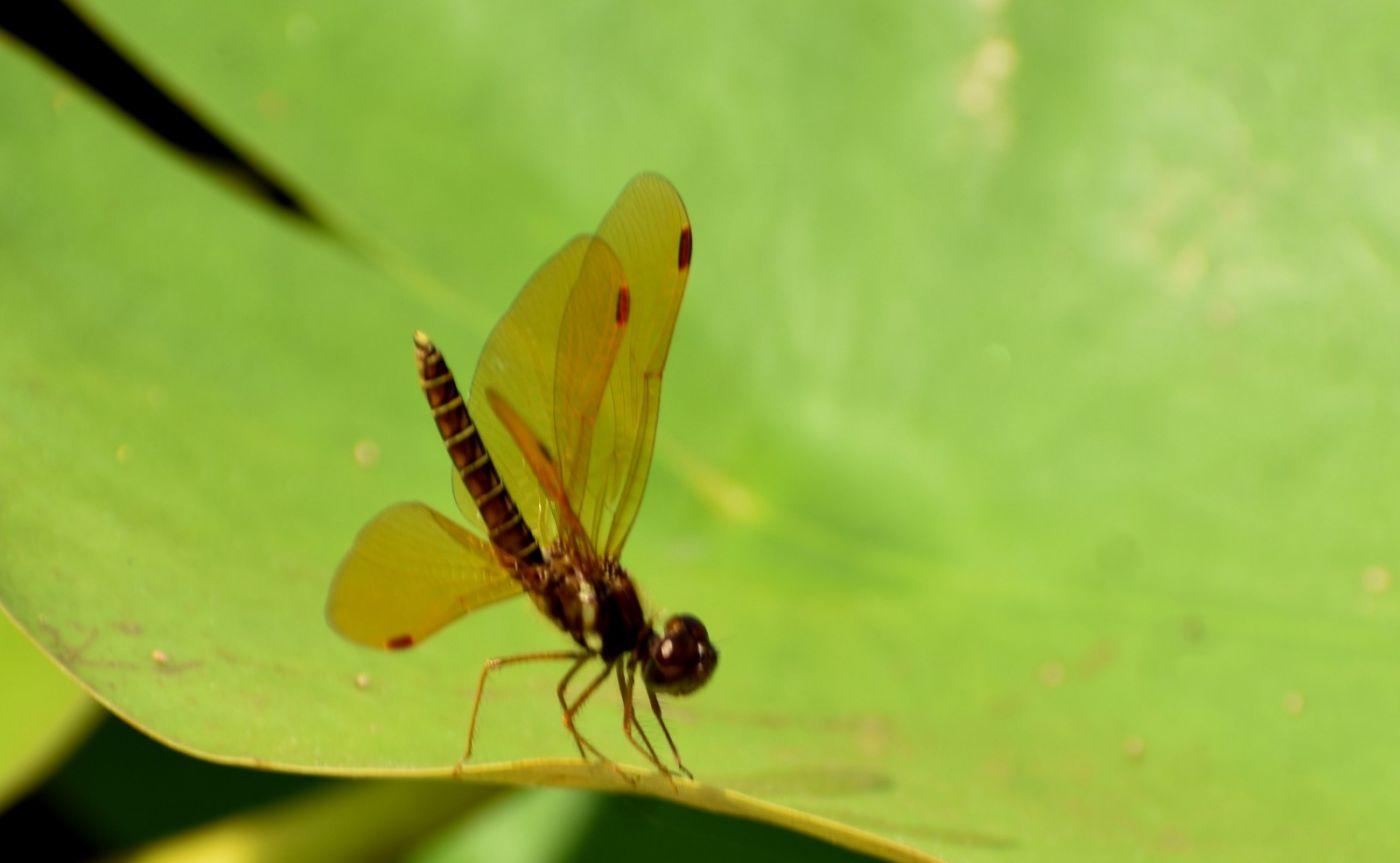 轻盈秀丽的蜻蜓_图1-15