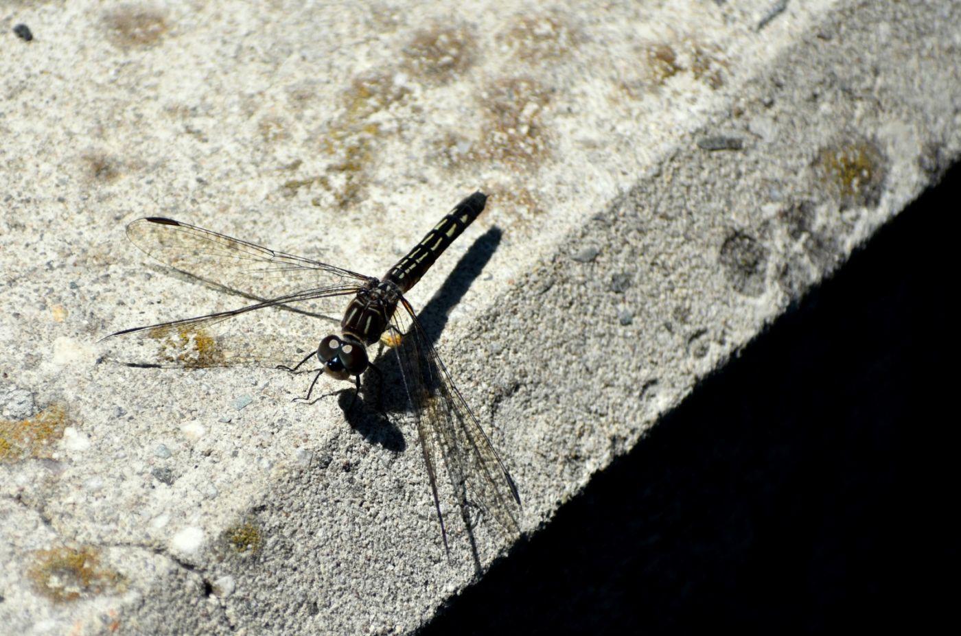 轻盈秀丽的蜻蜓_图1-16
