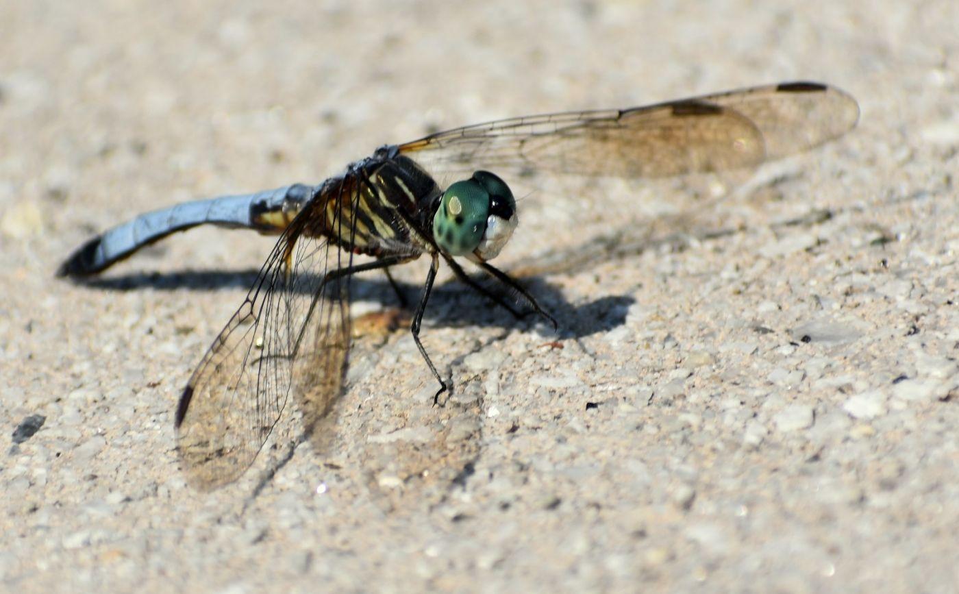轻盈秀丽的蜻蜓_图1-20