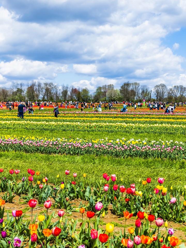 荷兰岭农场(Holland Ridge Farms, NJ),花的彩带_图1-7