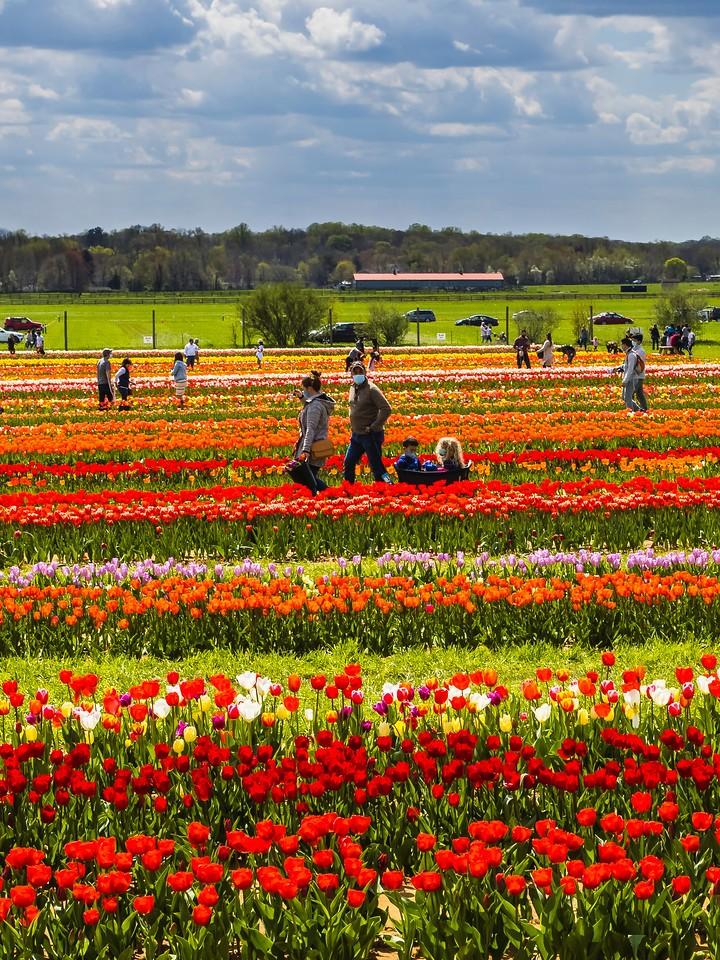 荷兰岭农场(Holland Ridge Farms, NJ),花的彩带_图1-6