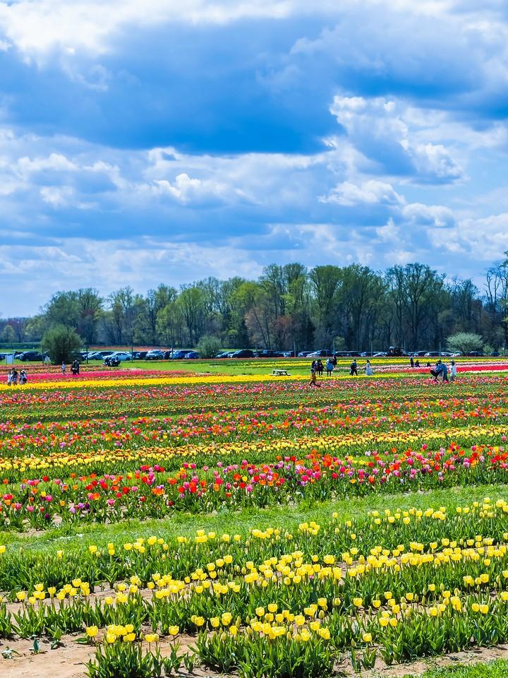 荷兰岭农场(Holland Ridge Farms, NJ),花的彩带_图1-9
