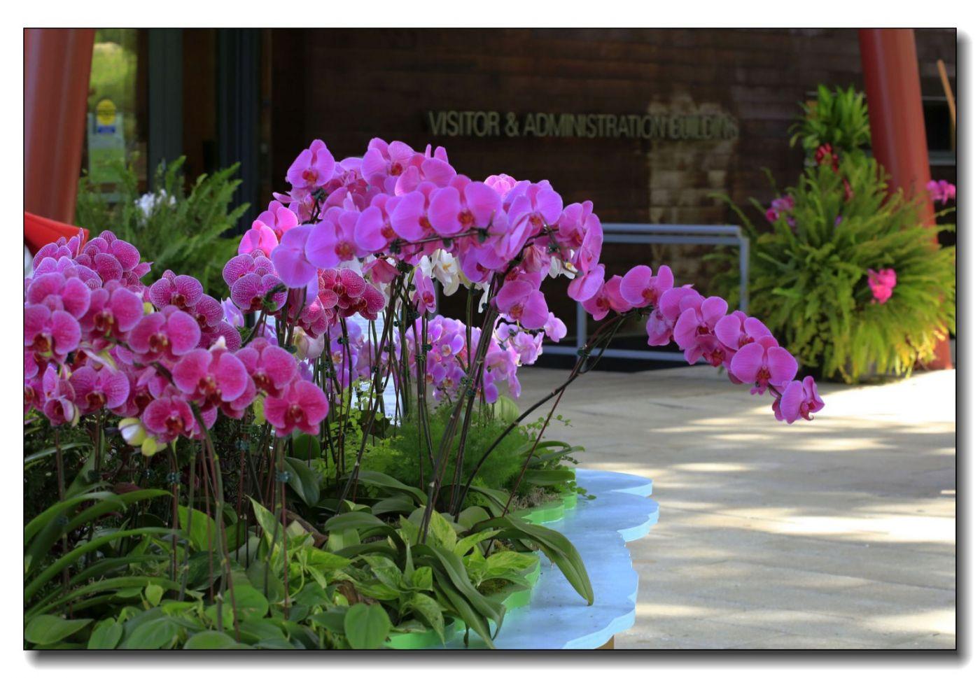 皇后区植物园兰花展随拍_图1-2