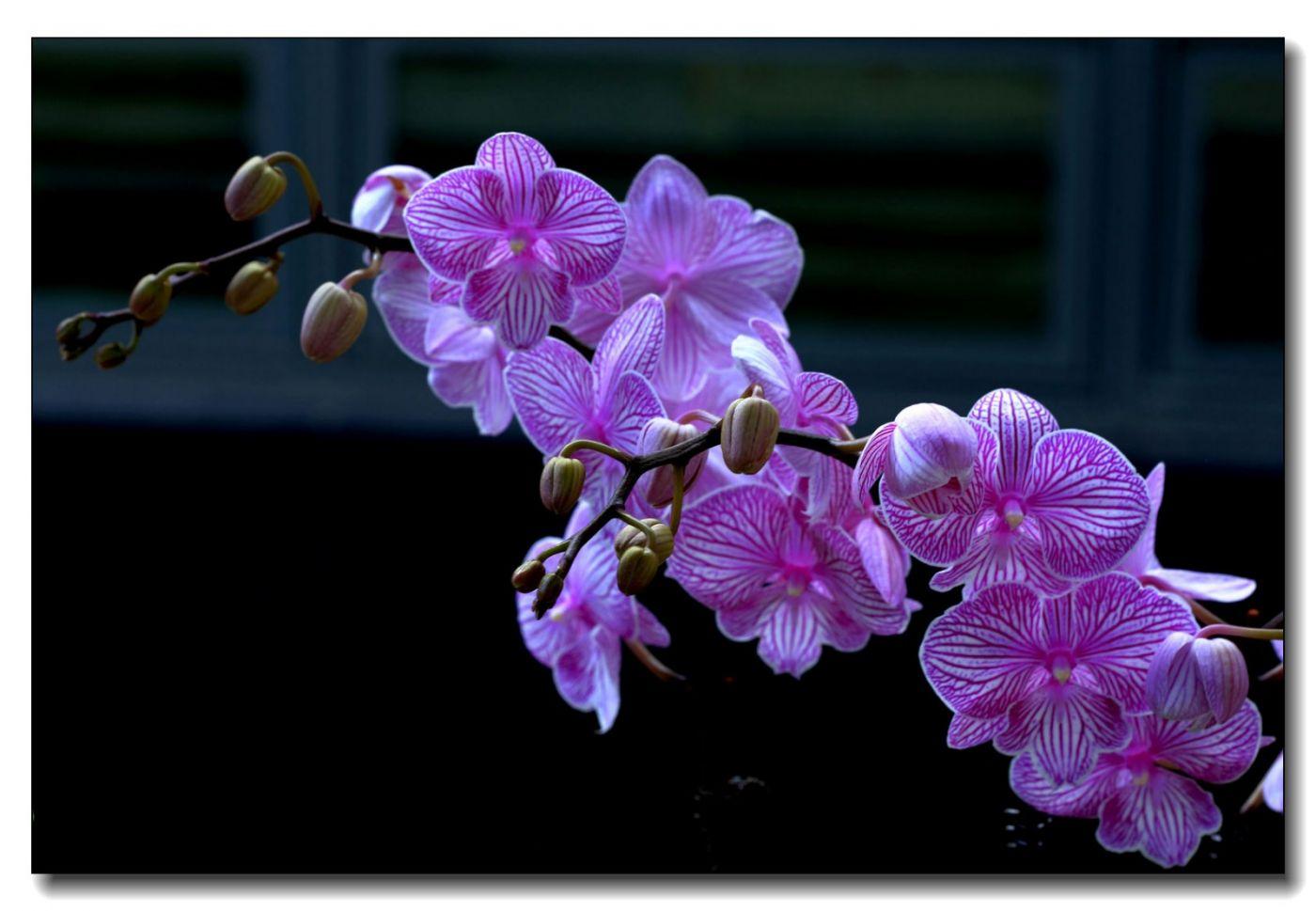 皇后区植物园兰花展随拍_图1-14