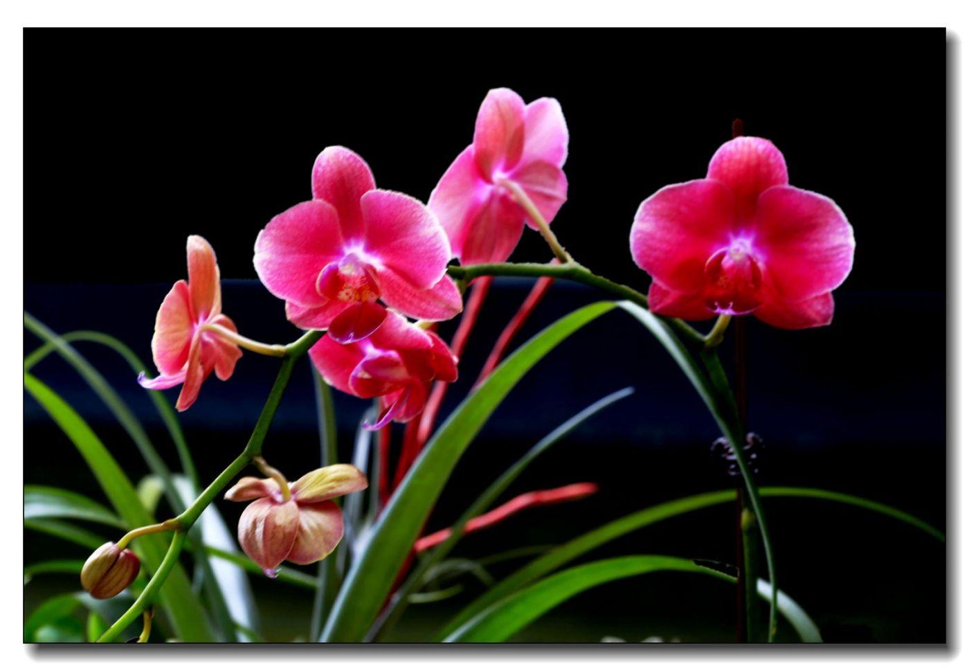 皇后区植物园兰花展随拍_图1-16
