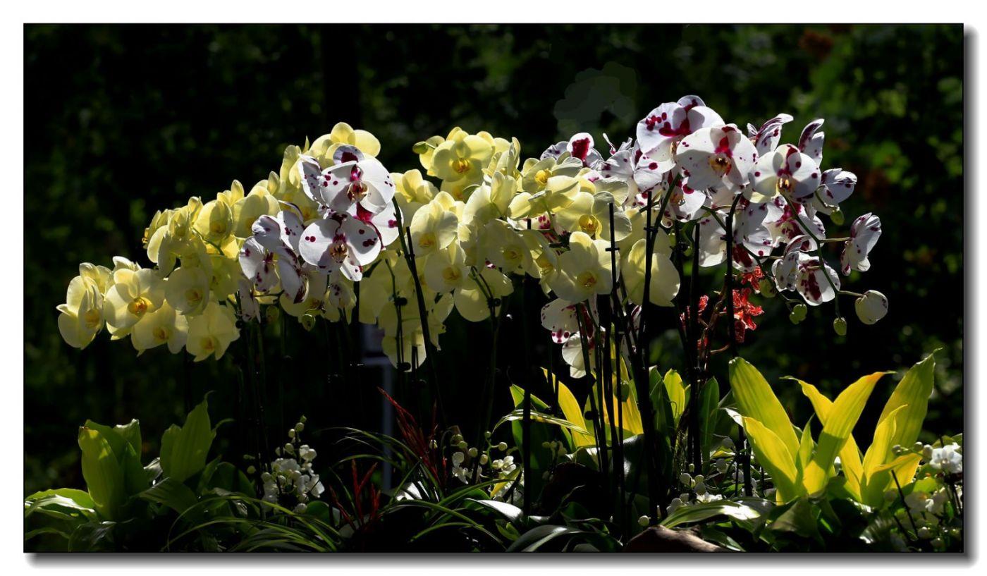 皇后区植物园兰花展随拍_图1-30
