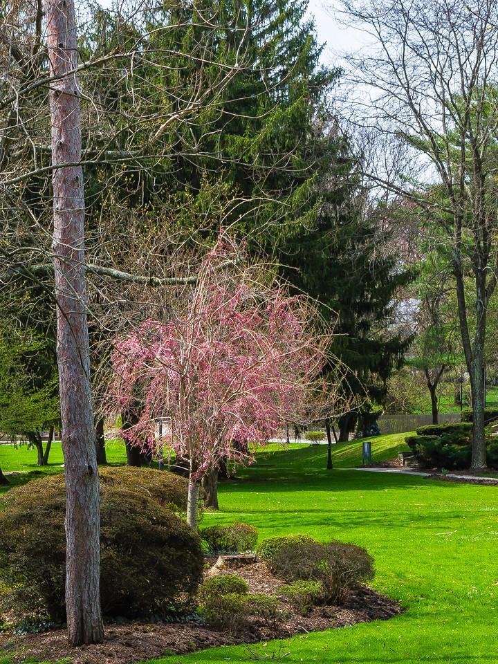 宾州罗斯蒙特学院(Rosemont College),校园记忆_图1-2