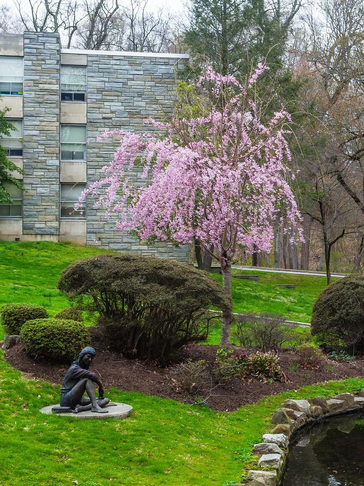 宾州罗斯蒙特学院(Rosemont College),校园记忆_图1-6