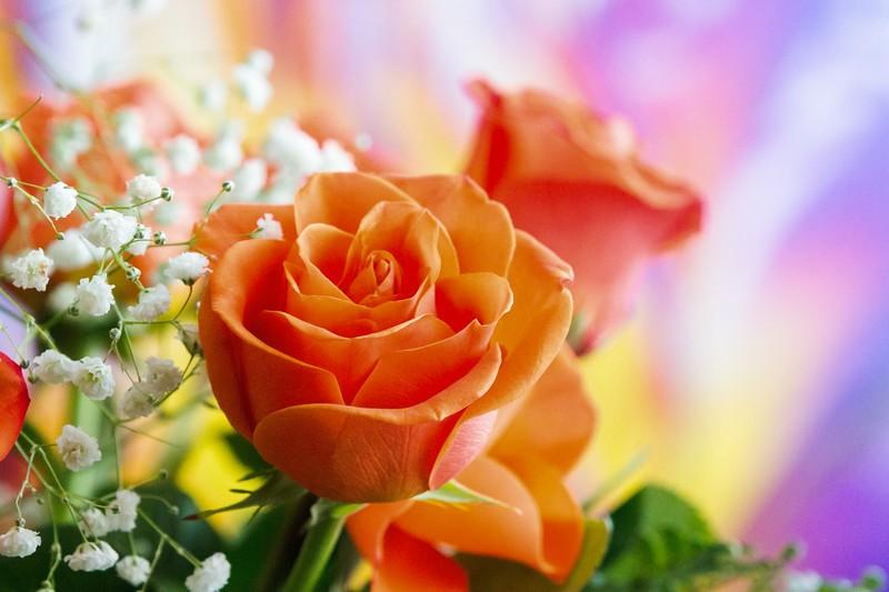 玫瑰花,水中花_图1-6
