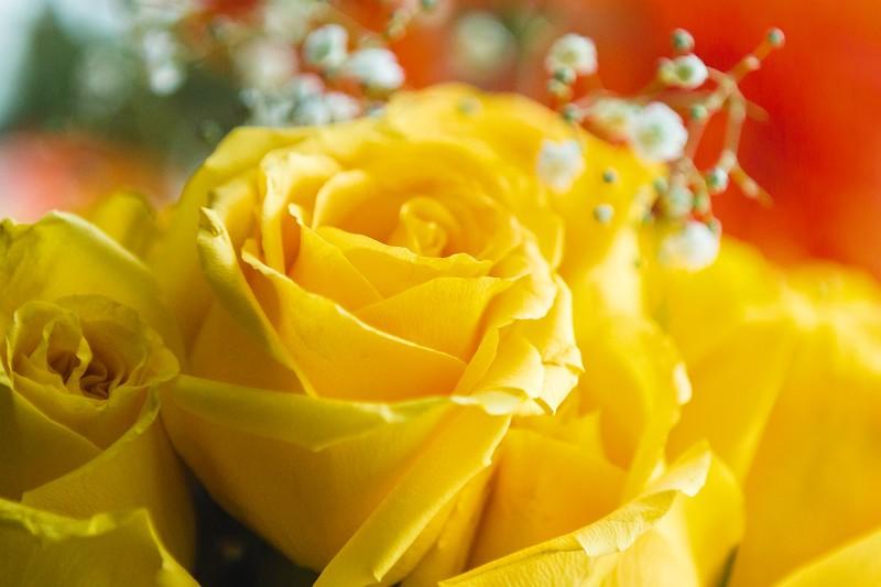 玫瑰花,水中花_图1-9