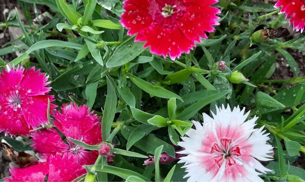 珍妮丝花园与她的宝贝猫_图1-3
